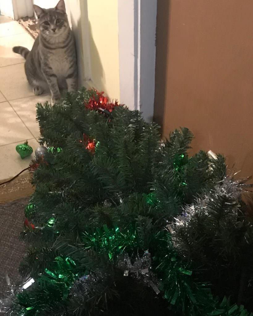 Коты против новогодней ёлки
