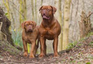 Тест: Сколько собачьих пород вы знаете?