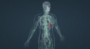 Тест: Вы знаете анатомию?