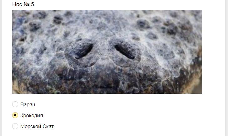 Ответы на тест. Угадайте животное по носу