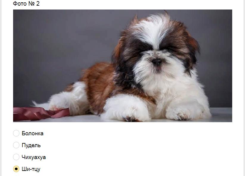 Ответы на тест-загадку. Какая порода собак изображена на фото