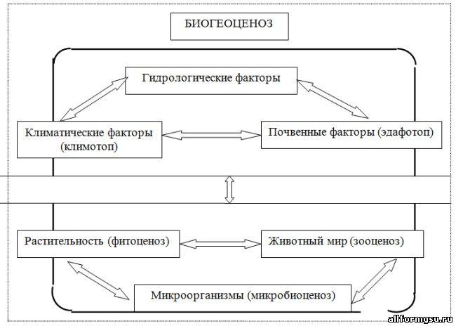 Биогеоценоз в чрезвычайной ситуации