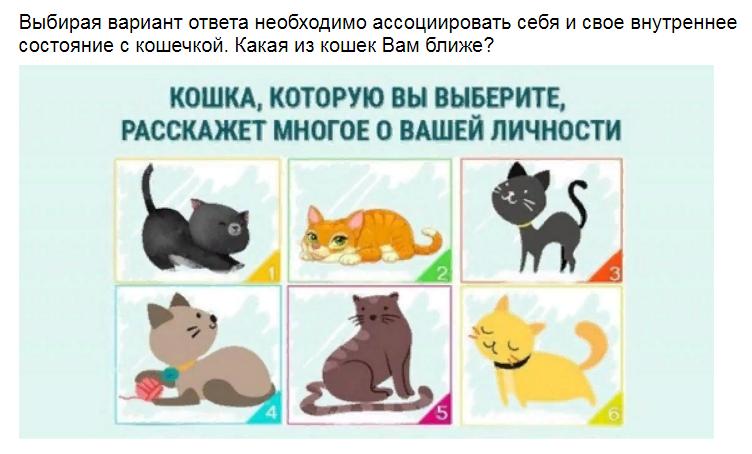Ответы на психологический тест. Выберите котенка и узнаете о своей личности