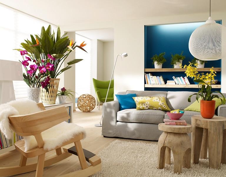 Какие комнатные цветы помогут украсить гостиную