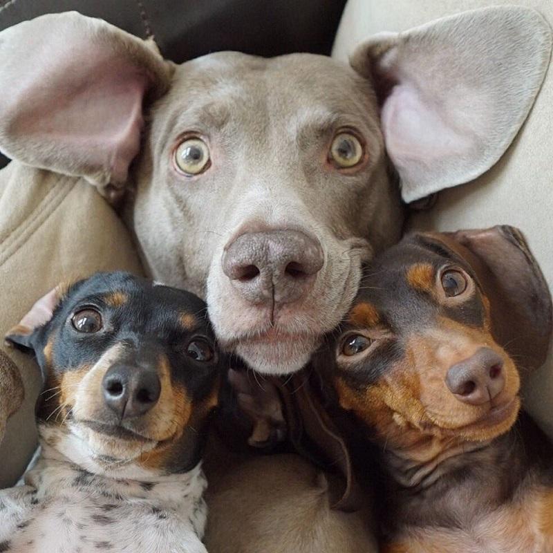 Самые общительные и веселые породы собак